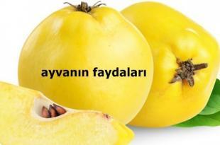 ayvanin-faydalari